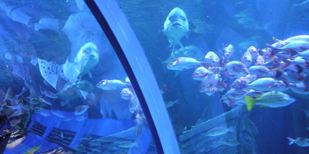 イルカショーも楽しめるしながわ水族館