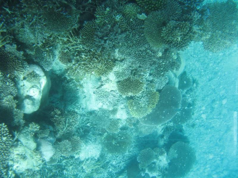 グラスボートだから珊瑚をを見て楽しめます