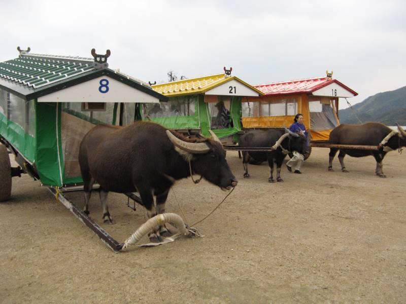 由布島亜熱帯植物園の水牛車