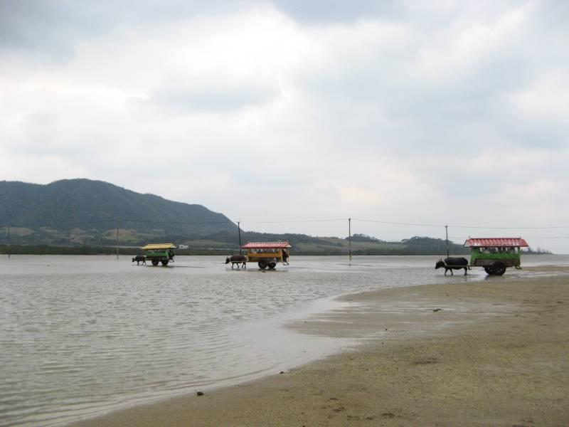 西表島の浅瀬の海を渡る水牛車の風景