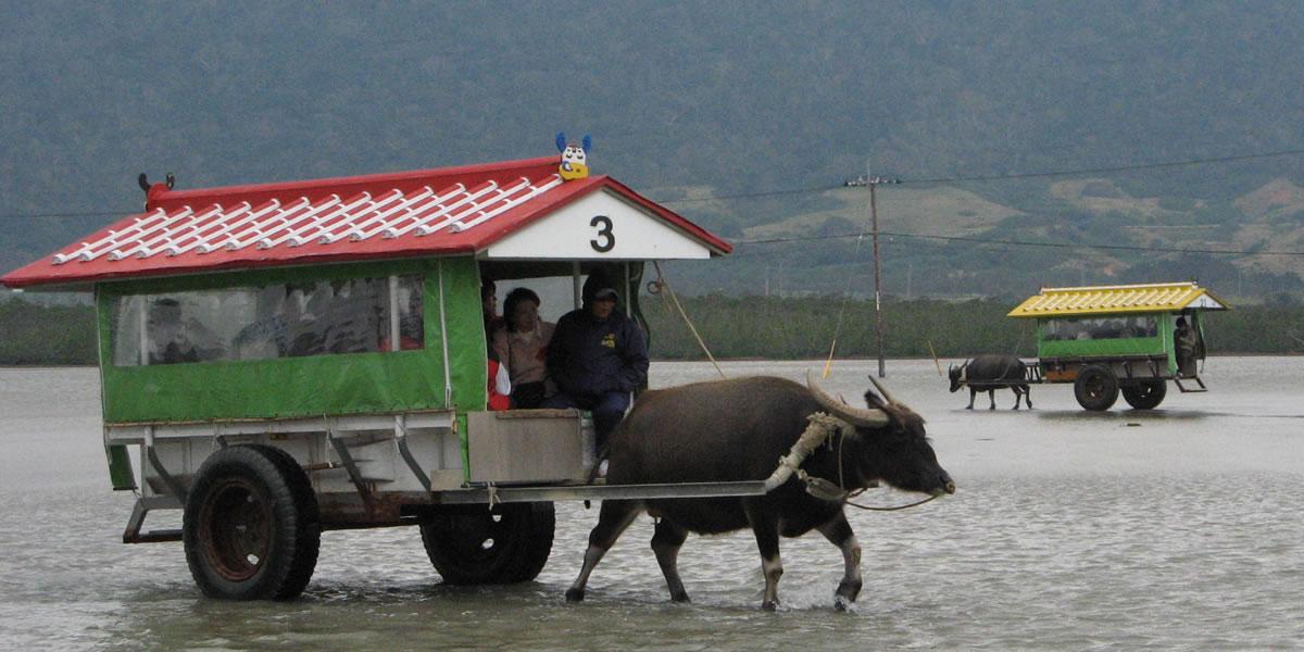 西表島で水牛車に乗ってきた! [石垣島 観光]