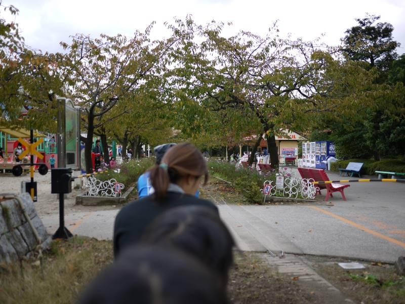 子どもが喜ぶミニ鉄道は公園内を走ります