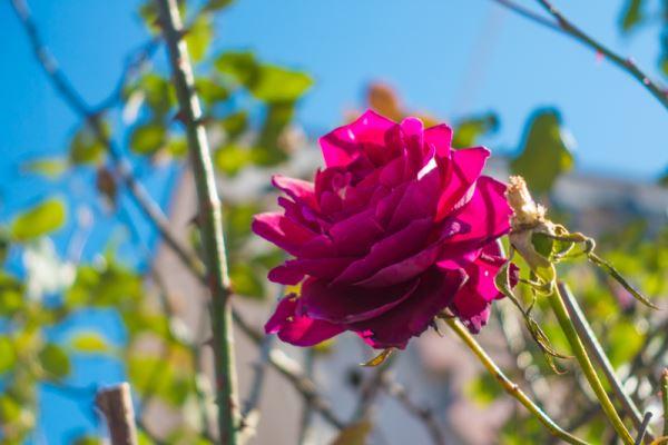 背景をぼかした綺麗な花を撮影してみた