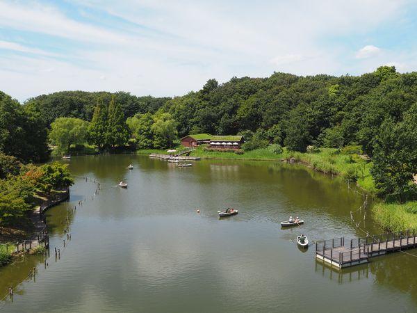 太陽の橋の下の池の手漕ぎボート